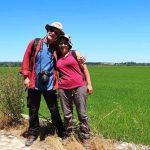rota dos arrozais 5